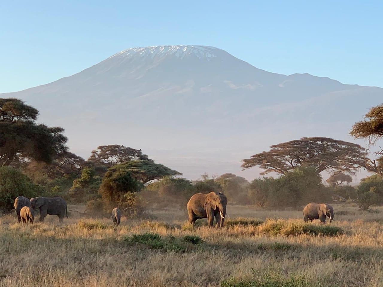 Elephants at Amboseli